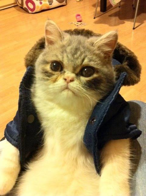 Cele mai dragute pisici din lume, in poze adorabile - Poza 20
