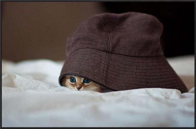 Cele mai dragute pisici din lume, in poze adorabile - Poza 21