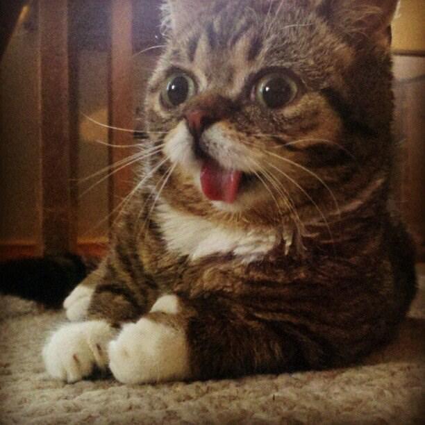 Cele mai dragute pisici din lume, in poze adorabile - Poza 22