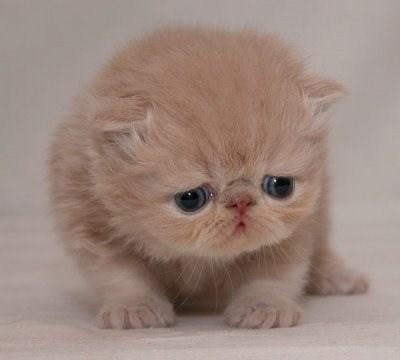 Cele mai dragute pisici din lume, in poze adorabile - Poza 23