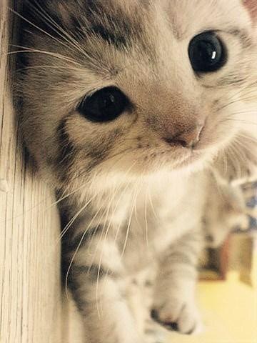 Cele mai dragute pisici din lume, in poze adorabile - Poza 24