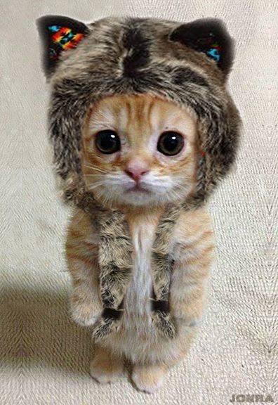 Cele mai dragute pisici din lume, in poze adorabile - Poza 3