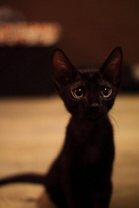 Cele mai dragute pisici din lume, in poze adorabile - Poza 4