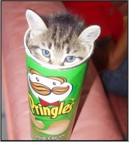 Cele mai dragute pisici din lume, in poze adorabile - Poza 5