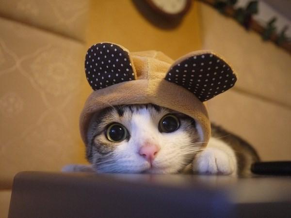 Cele mai dragute pisici din lume, in poze adorabile - Poza 6