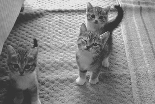 Cele mai dragute pisici din lume, in poze adorabile - Poza 8