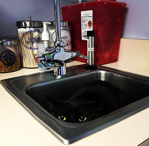 Cele mai amuzante ascunzisuri ale pisicilor - Poza 1