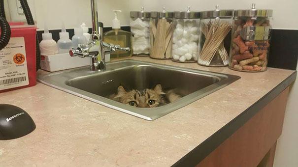 Cele mai amuzante ascunzisuri ale pisicilor - Poza 10