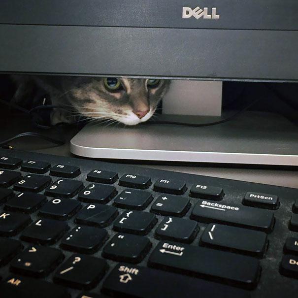 Cele mai amuzante ascunzisuri ale pisicilor - Poza 15