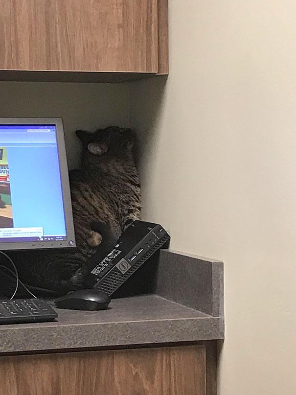 Cele mai amuzante ascunzisuri ale pisicilor - Poza 4
