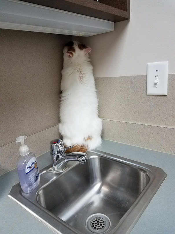 Cele mai amuzante ascunzisuri ale pisicilor - Poza 6
