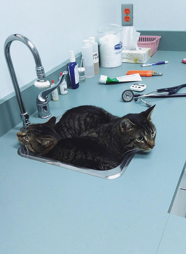 Cele mai amuzante ascunzisuri ale pisicilor - Poza 7