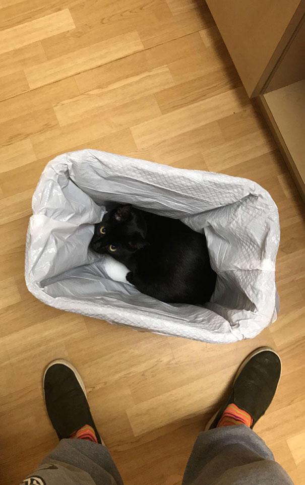 Cele mai amuzante ascunzisuri ale pisicilor - Poza 9