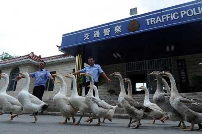 Cele mai ciudate lucruri care se pot intampla doar in China - Poza 3
