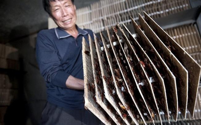 Cele mai ciudate lucruri care se pot intampla doar in China - Poza 9