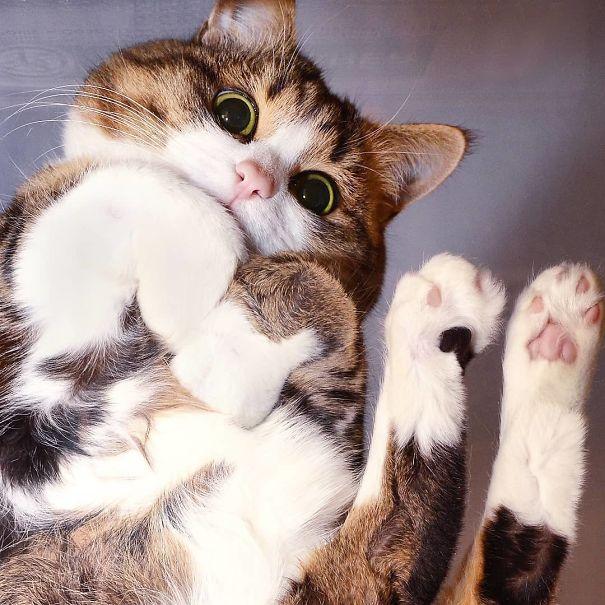 Pisici pe sticla. Altfel de ipostaze haioase ale nabadaioaselor feline - Poza 2