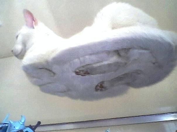 Pisici pe sticla. Altfel de ipostaze haioase ale nabadaioaselor feline - Poza 10