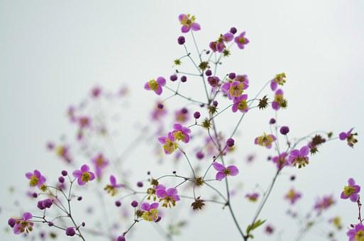 Superbele flori de primavara, in poze de o frumusete rara - Poza 10
