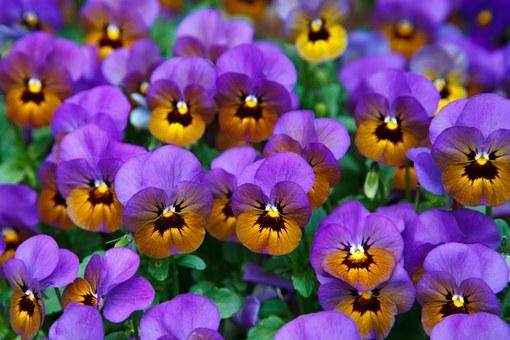 Superbele flori de primavara, in poze de o frumusete rara - Poza 11