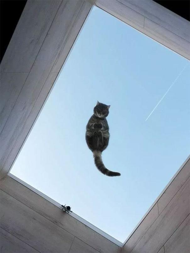 Pisici pe sticla. Altfel de ipostaze haioase ale nabadaioaselor feline - Poza 12