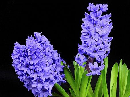 Superbele flori de primavara, in poze de o frumusete rara - Poza 12