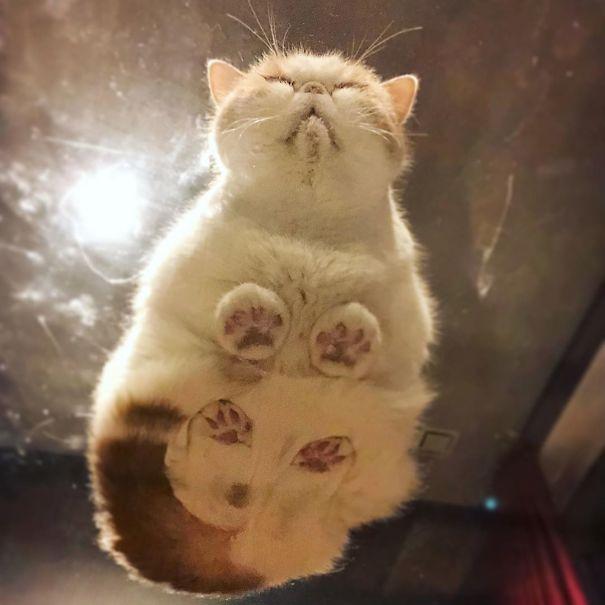 Pisici pe sticla. Altfel de ipostaze haioase ale nabadaioaselor feline - Poza 13