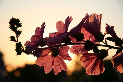 Superbele flori de primavara, in poze de o frumusete rara - Poza 14