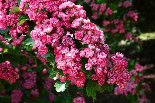 Superbele flori de primavara, in poze de o frumusete rara - Poza 15