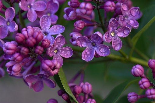 Superbele flori de primavara, in poze de o frumusete rara - Poza 16