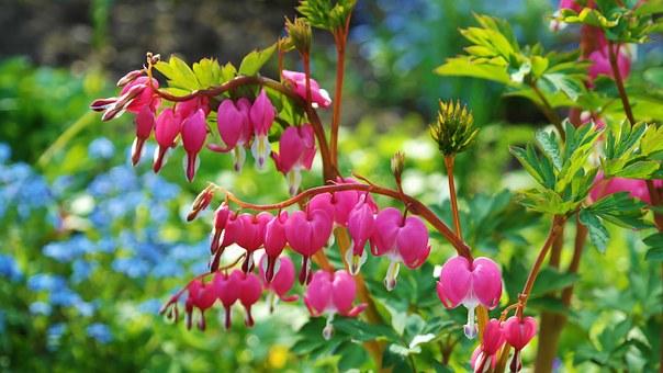 Superbele flori de primavara, in poze de o frumusete rara - Poza 17