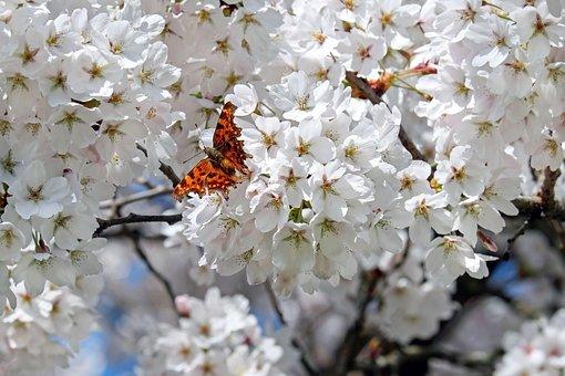Superbele flori de primavara, in poze de o frumusete rara - Poza 18