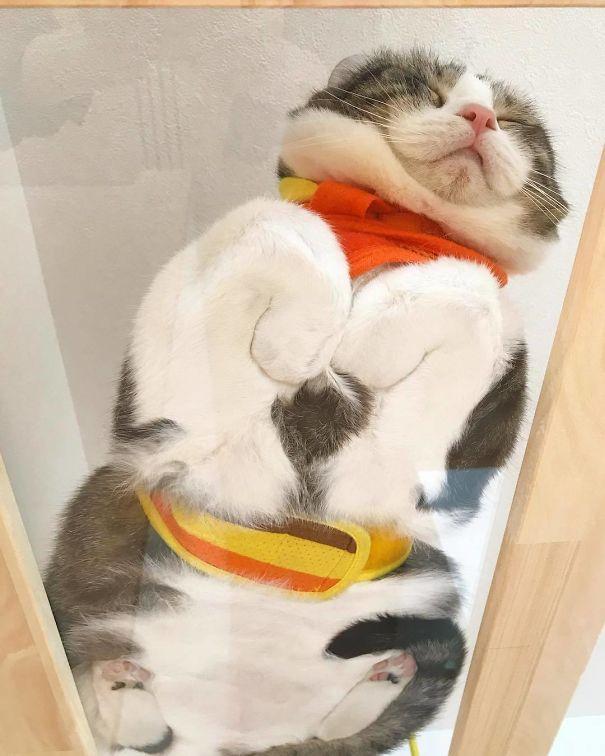 Pisici pe sticla. Altfel de ipostaze haioase ale nabadaioaselor feline - Poza 19