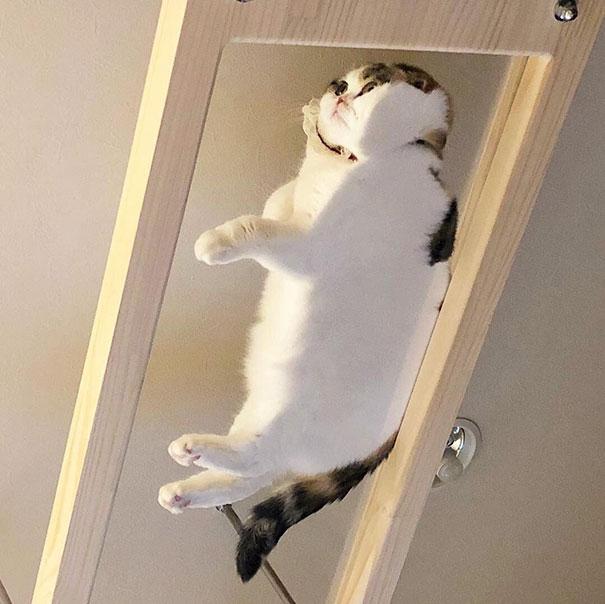 Pisici pe sticla. Altfel de ipostaze haioase ale nabadaioaselor feline - Poza 3
