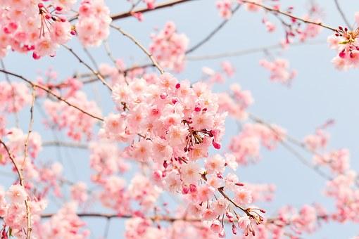Superbele flori de primavara, in poze de o frumusete rara - Poza 2
