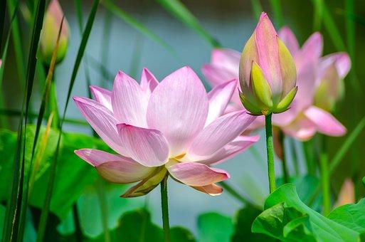 Superbele flori de primavara, in poze de o frumusete rara - Poza 20