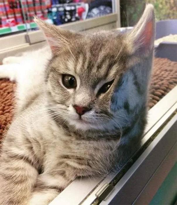 Pisici pe sticla. Altfel de ipostaze haioase ale nabadaioaselor feline - Poza 20