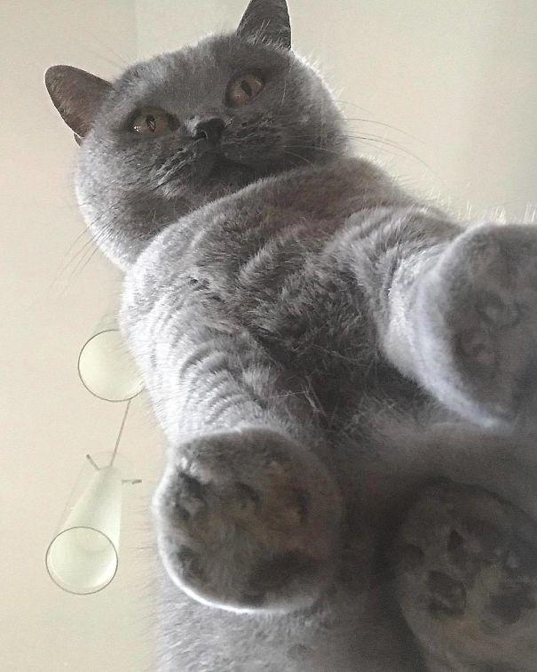 Pisici pe sticla. Altfel de ipostaze haioase ale nabadaioaselor feline - Poza 22