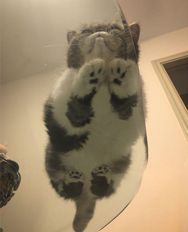 Pisici pe sticla. Altfel de ipostaze haioase ale nabadaioaselor feline - Poza 24