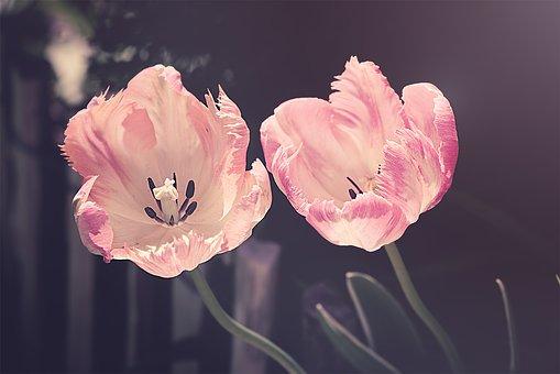 Superbele flori de primavara, in poze de o frumusete rara - Poza 3