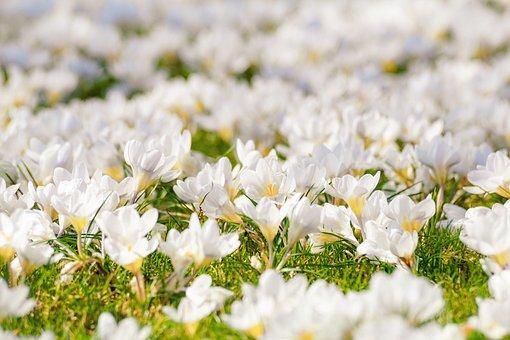 Superbele flori de primavara, in poze de o frumusete rara - Poza 4