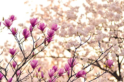 Superbele flori de primavara, in poze de o frumusete rara - Poza 5