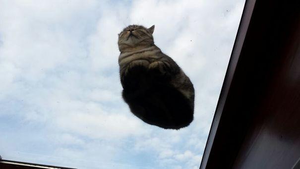 Pisici pe sticla. Altfel de ipostaze haioase ale nabadaioaselor feline - Poza 6
