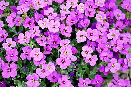 Superbele flori de primavara, in poze de o frumusete rara - Poza 8