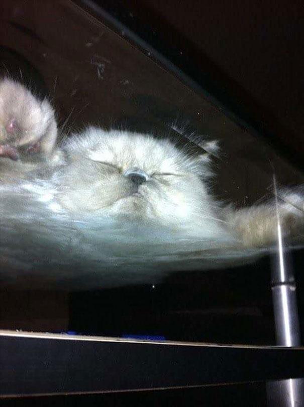Pisici pe sticla. Altfel de ipostaze haioase ale nabadaioaselor feline - Poza 9