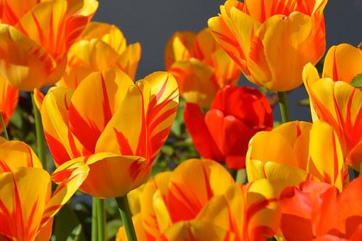 Superbele flori de primavara, in poze de o frumusete rara - Poza 9