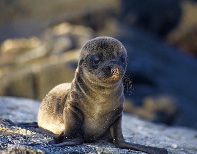 Cele mai simpatice animalute de la Polul Nord, in poze adorabile - Poza 13